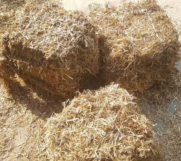 绵阳玉米秸秆饲料