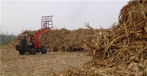 四川玉米秸秆饲料的加工及饲喂方法