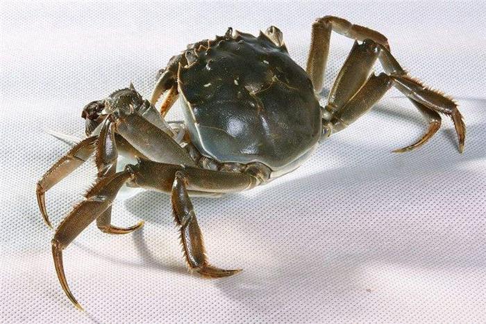 新疆大闸蟹养殖场