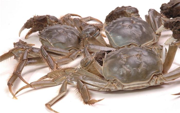 简单快速吃蟹肉的小方法,新疆五两红大闸蟹厂家告诉你