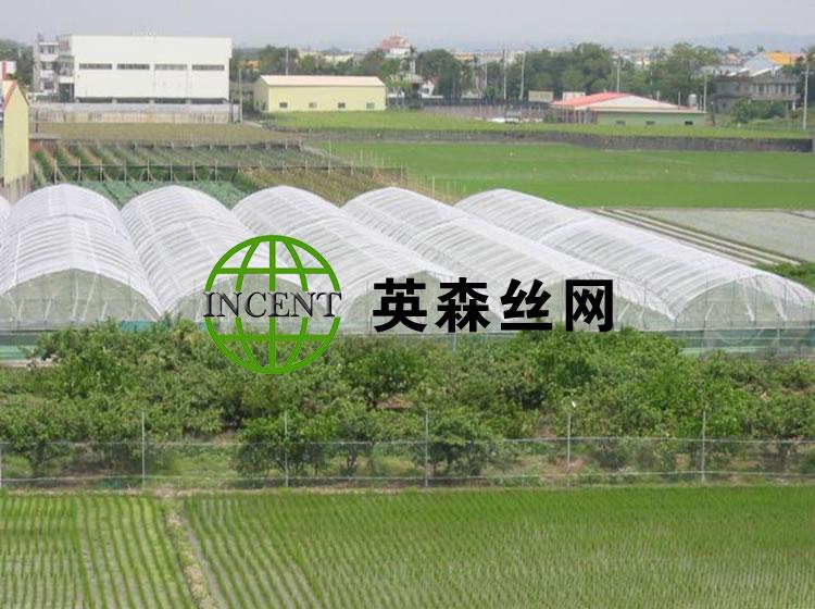 济南某种植户使用我公司防虫网