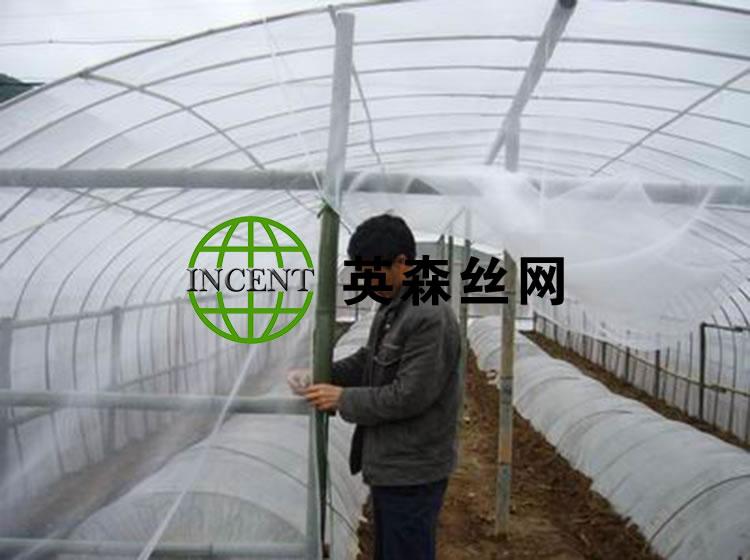 河北饶阳某种植户使用我公司防虫网