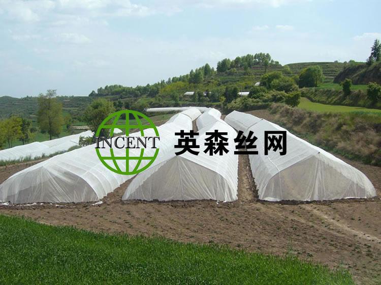 山东某种植厂使用我公司防虫网