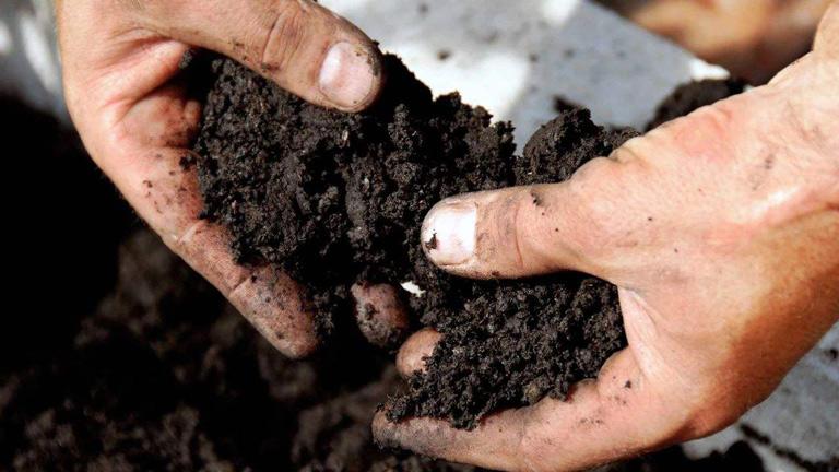 二氧化氯土壤消毒杀死病菌**作物安全