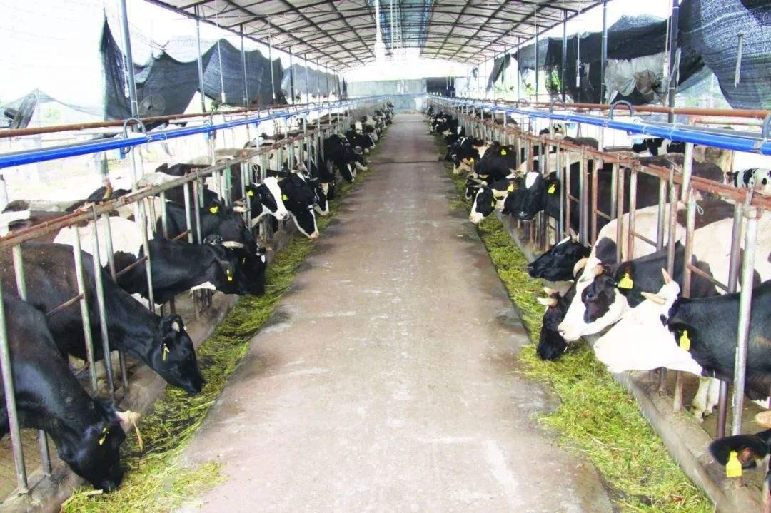 二氧化氯在畜禽养殖中的应用