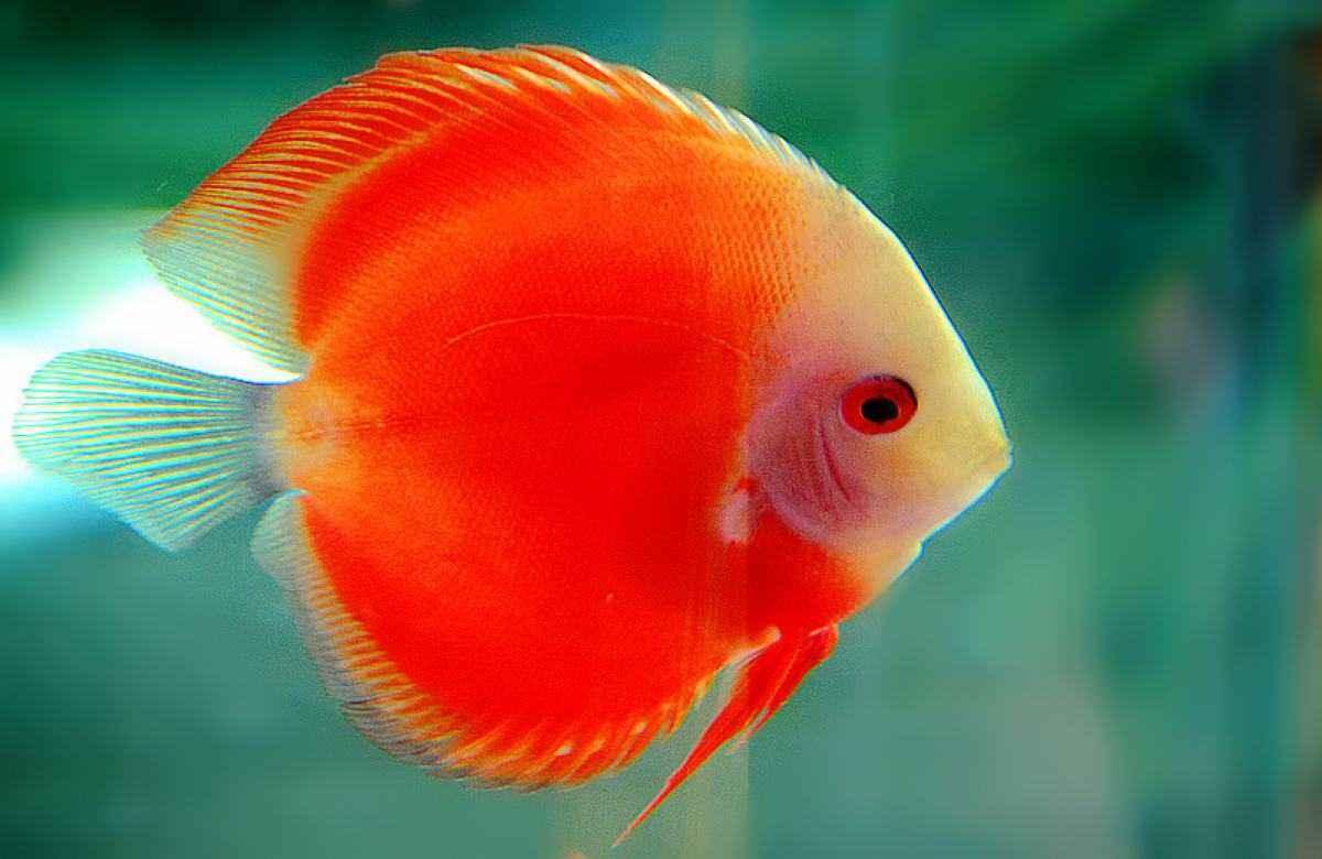 二氧化氯观赏鱼应用