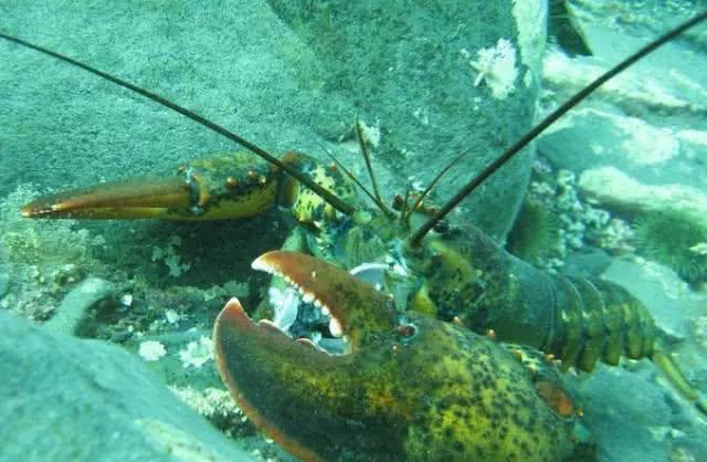 二氧化氯在池塘虾中的应用