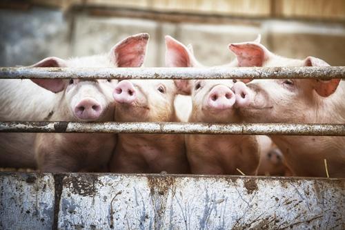二氧化氯非含氯消毒剂,且在畜牧养殖中的应用