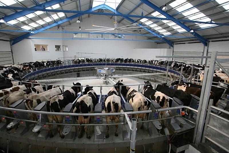 博美特挤奶机D4000自动脱杯挤奶控制系统优势是什么?