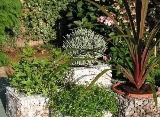 石笼网做的绿植