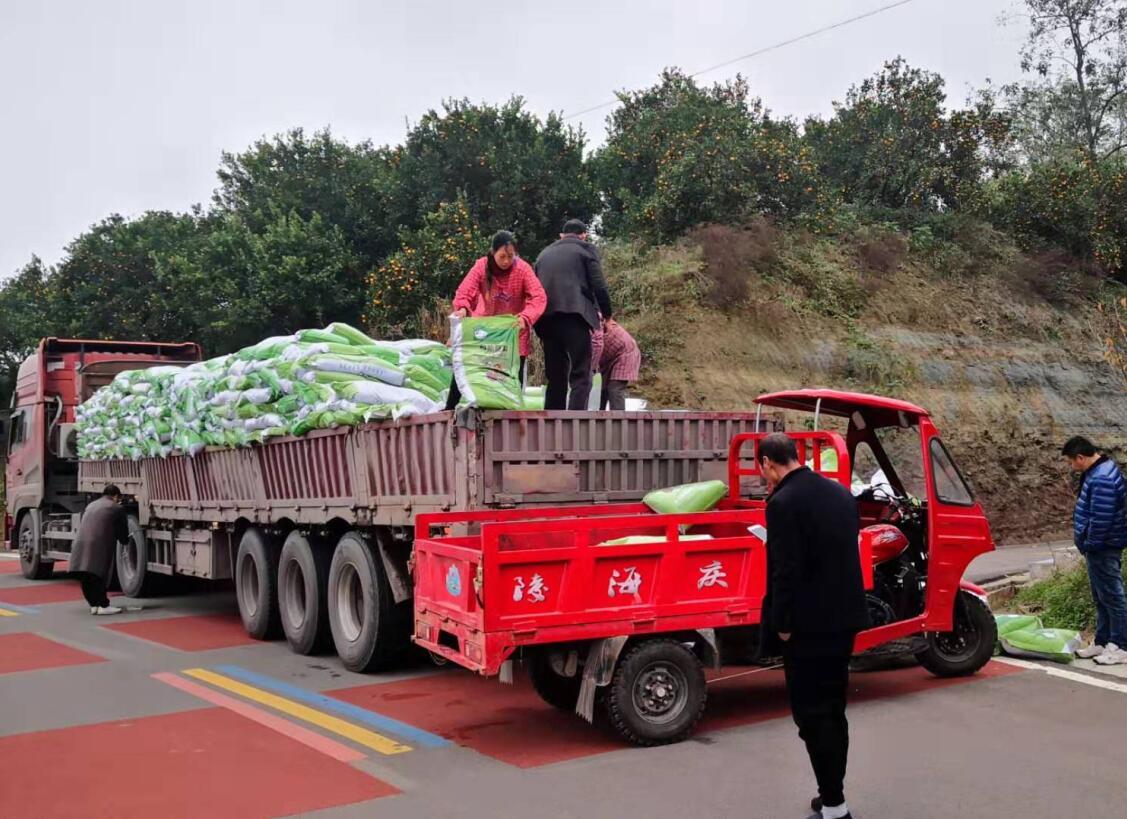 重庆王总三千亩耙耙柑基地