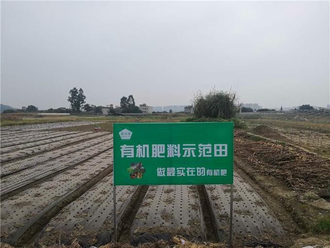 新世源-四川果树有机肥五百亩耙耙柑、蜜桃基地