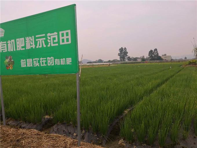 田间示范地-四川果树有机肥厂家
