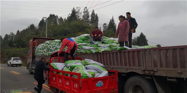 重庆王总3000亩耙耙柑基地-四川果树有机肥厂家
