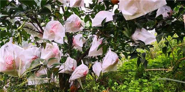 四川果树有机肥厂家-沃柑有机肥/蜜桃有机肥