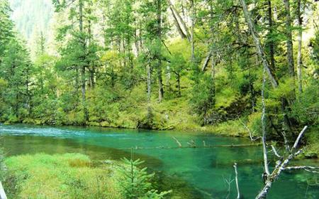 湖北林业调查