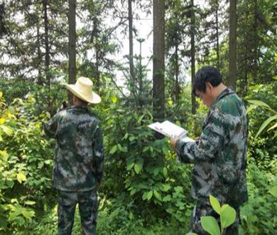 建设项目湖北林业调查使用林地审核审批管理办法