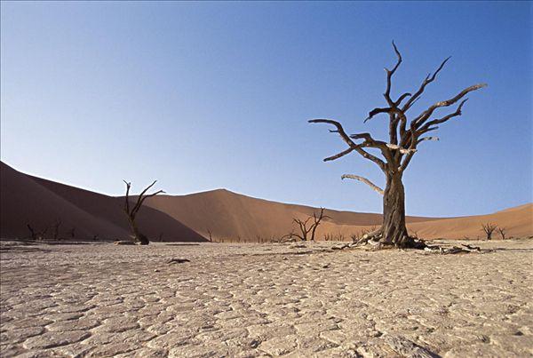企业组织沙漠团建