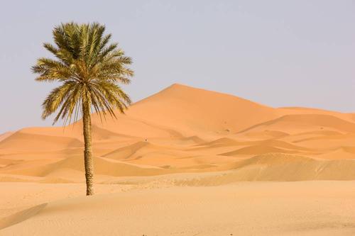 沙漠旅游小贴士! 必知哦!