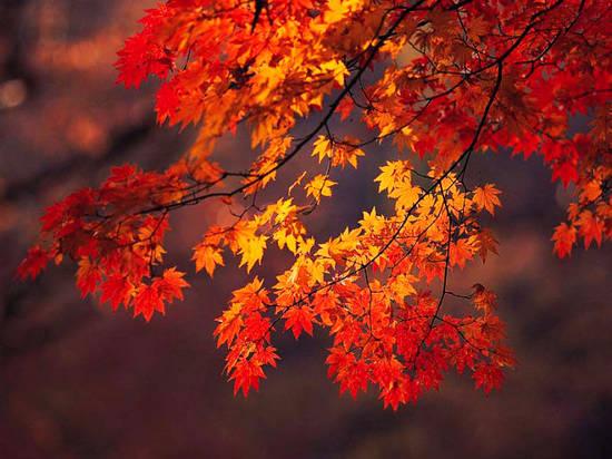 秋季旅游有哪些需要特别注意的事?看完带着家人放心去旅行!