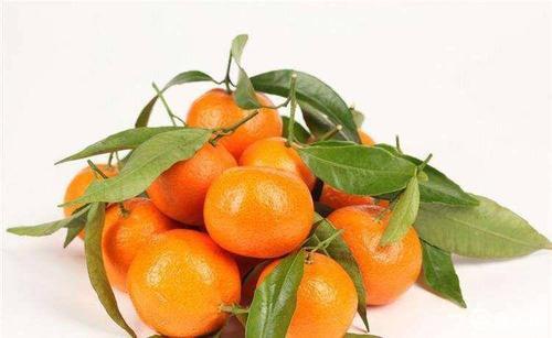 四川明日见柑橘苗