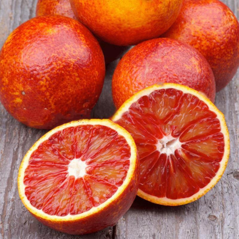四川血橙苗种植方法与管理技术