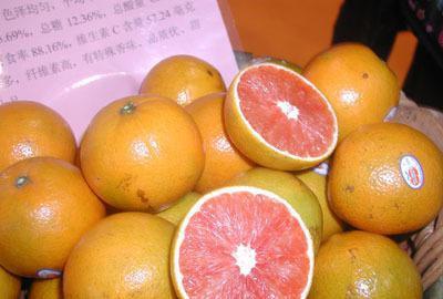 四川血橙苗