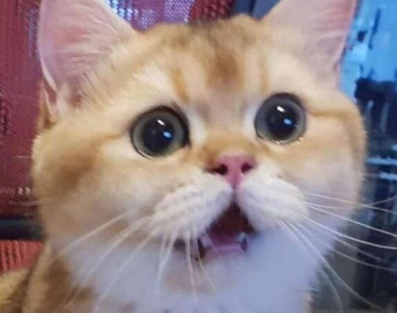 专家称撸猫有助于缓解老年痴呆,你有猫了吗?
