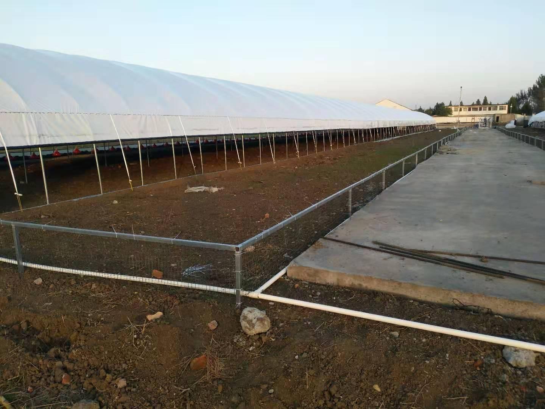 河南种蛋养殖厂家基地展示