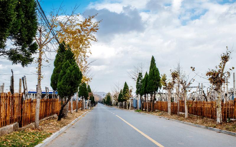 道路绿化工程