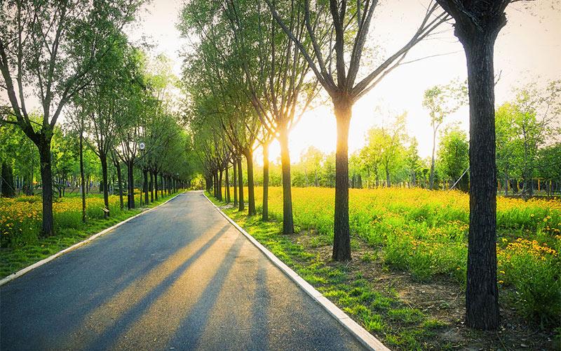行道树种类选择及注意事项