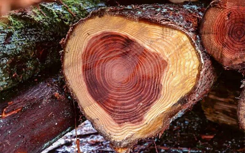 古典园林景观中的常用木材有哪些?