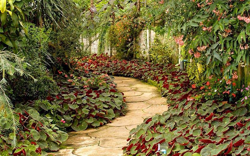 园林景观中植物空间的构成