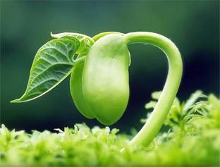 功能肥是什么?对植物有什么作用?