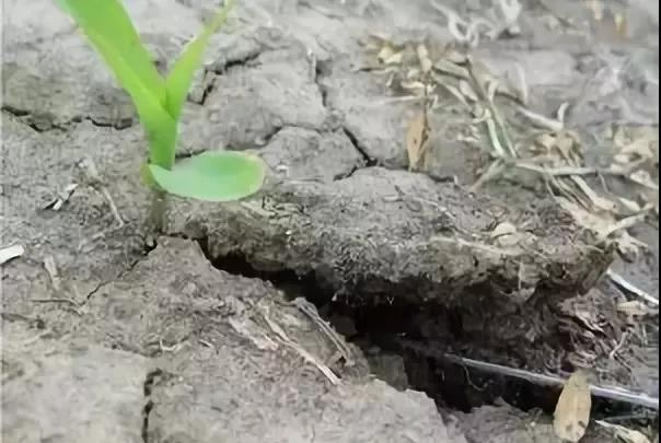 土壤板结十大原因,你知道几个?