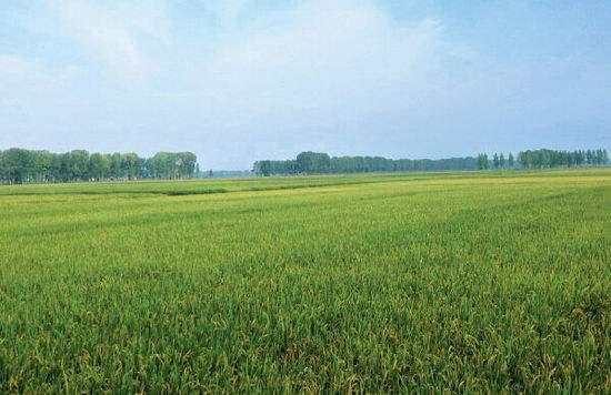 只知道肥料撒到地里了,那作物到底吸收了没?