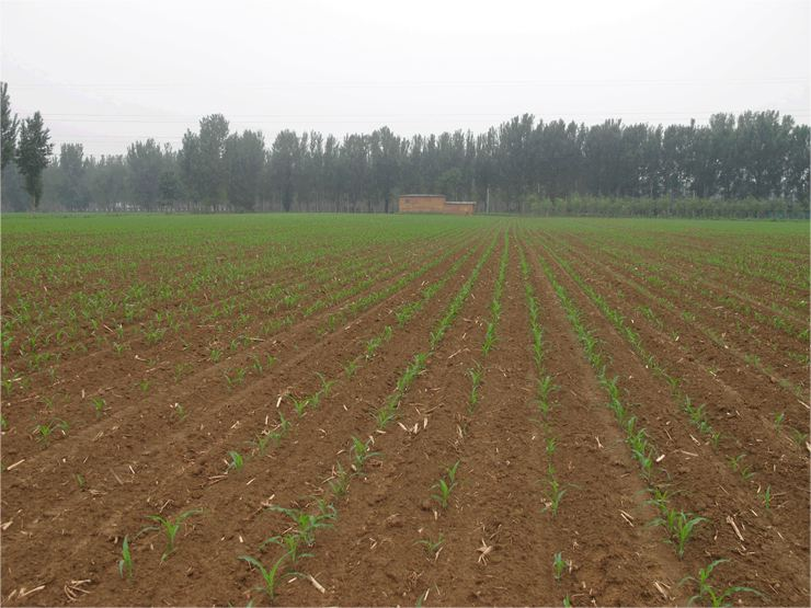 四川水溶肥直销厂家简述施肥的使用方法和技巧