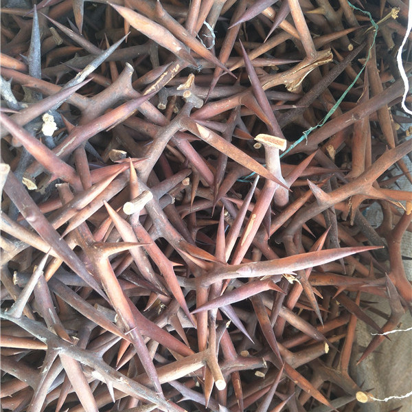 河南皂角刺种植