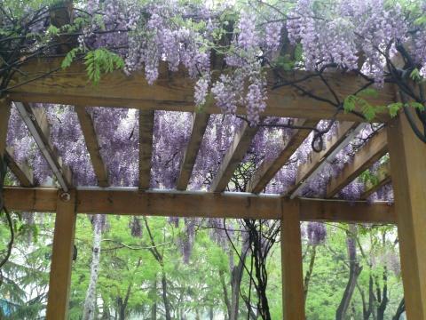 紫藤防腐木花架