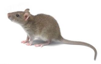 消杀灭鼠图片展示
