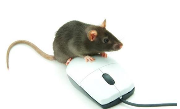 办公楼有老鼠怎么办?办公楼灭鼠杀虫药剂使用原则是什么?