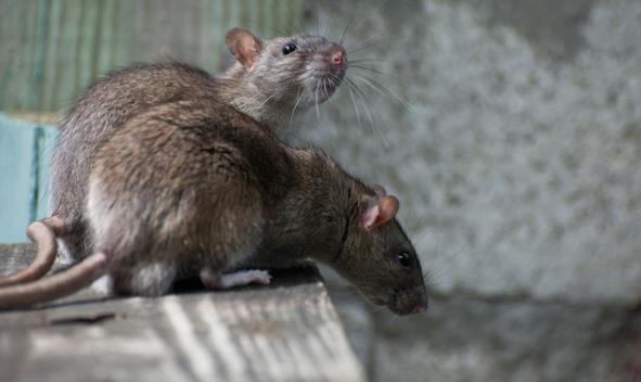 银川灭鼠公司
