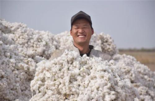 这样的新疆棉花,我支持!