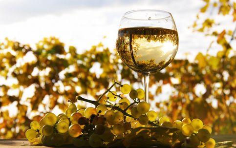干白葡萄酒酿造
