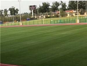 人造草坪和足球场的不解之缘,彼此之间互相成就共同发展