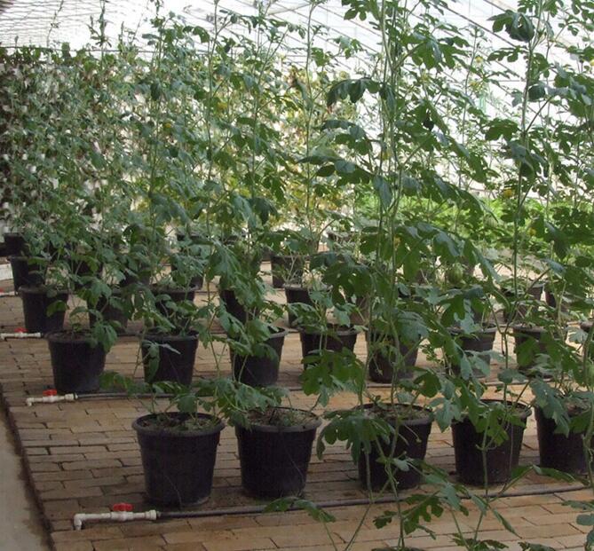 河南观光农业温室