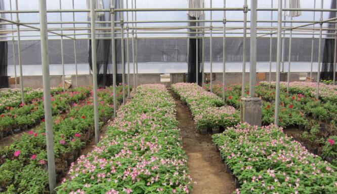 河南花卉市場