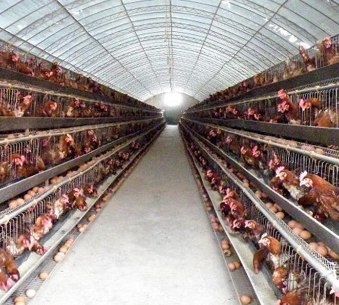 河南温室大棚养殖温室