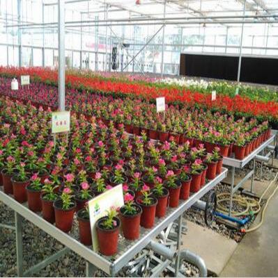 花卉玻璃温室是怎么把花朵种子成功培育成美丽的鲜花的呢?花卉玻璃温室的结构是什么样的呢?