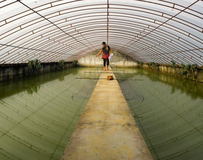 河南養殖溫室